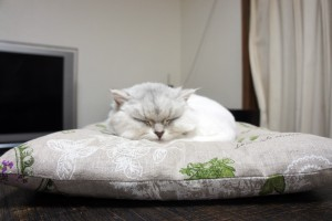 sleepingcat04
